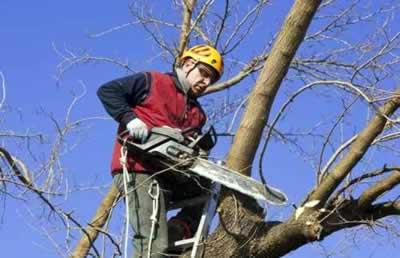 Elagage et soin des arbres