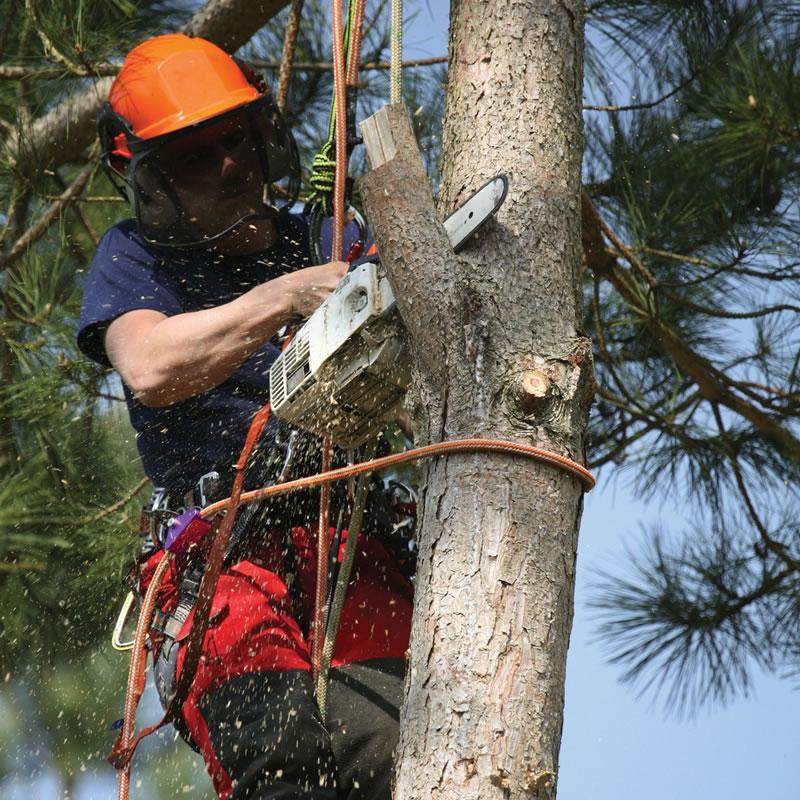 Élagage et soin des arbres