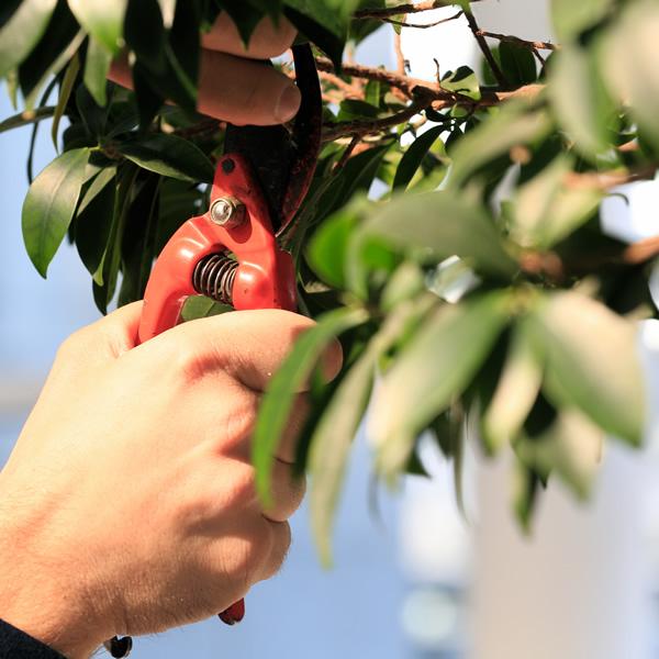 Passion pour la nature et passion pour le jardinage