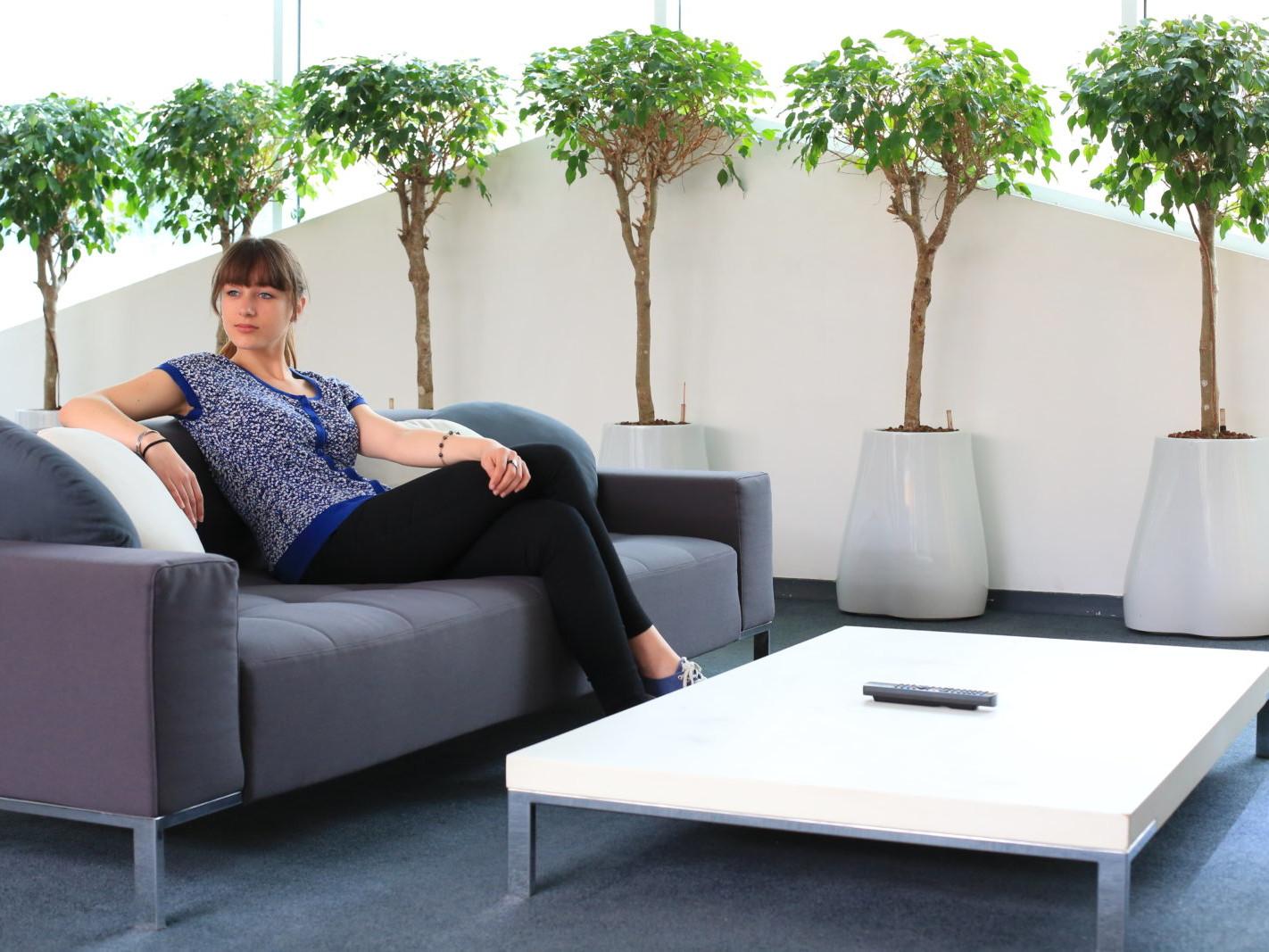 location e plantes pour les entreprises