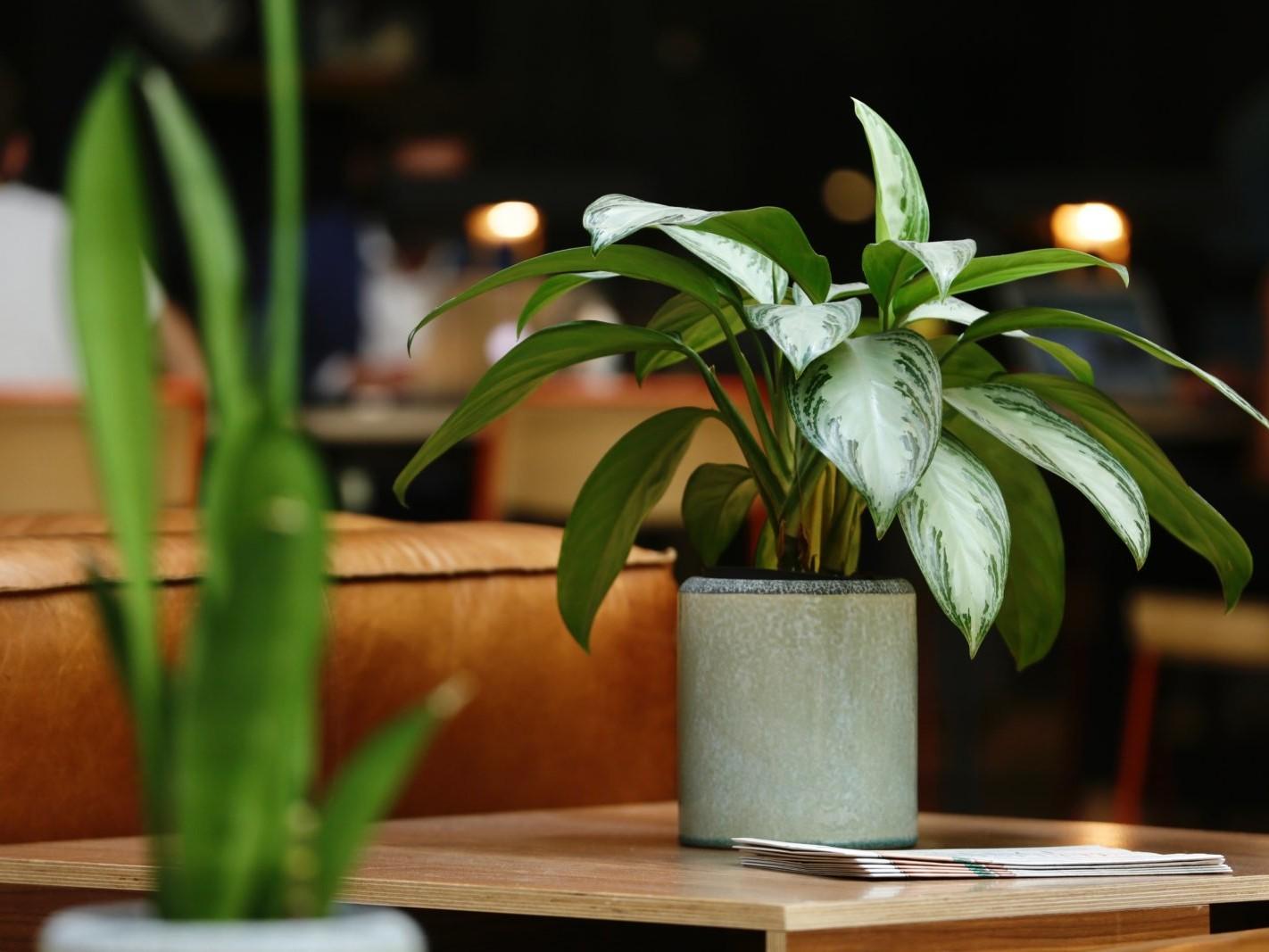 location de plantes en entreprise, la solution pour le bien-être de vos collaborateurs