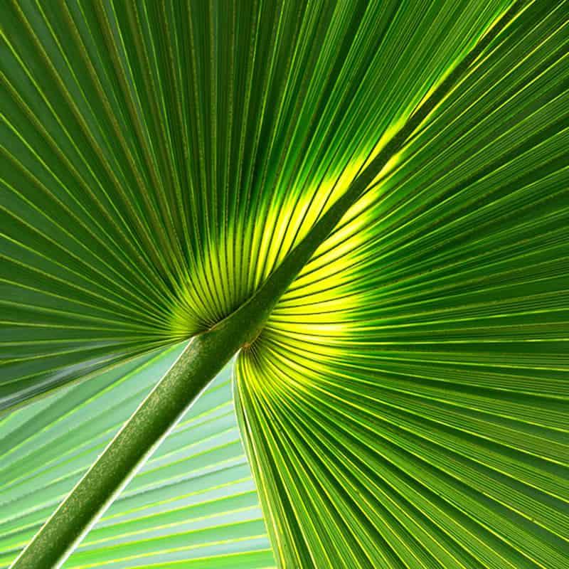 Green Decor - Design Végétal et location de plantes pour les entreprises