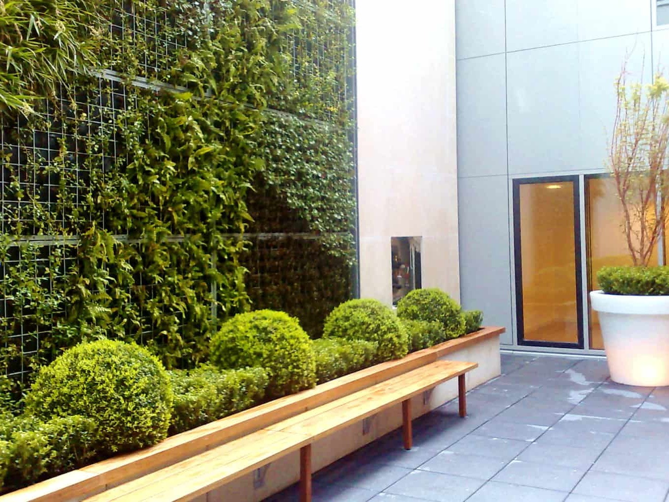 Mur végétal avec plantes naturelles