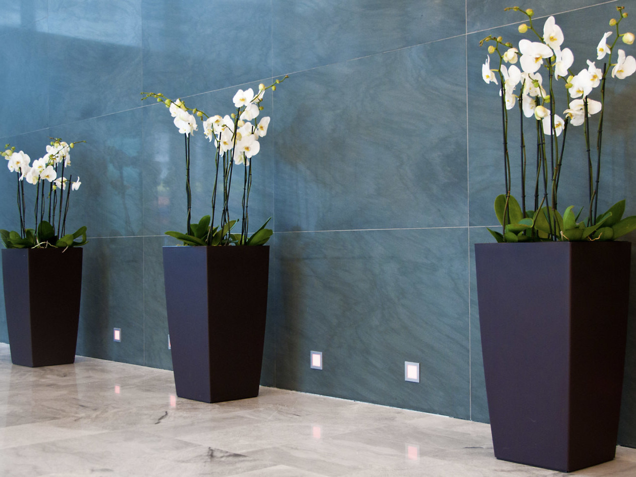 location de plantes avec contrat d'entretien par Green Decor