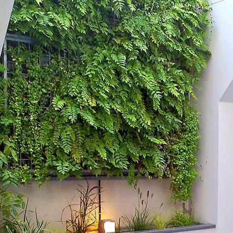 Mur végétal, tableau végétalisé en entreprise et bureaux